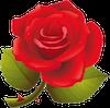 flowerR0269