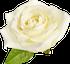 flower3997i